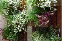 Jardins vertical