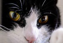 ασπρομαυρες γατες