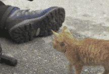 Roztomilé mačky