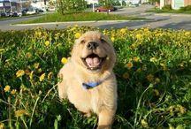 joy&happiness