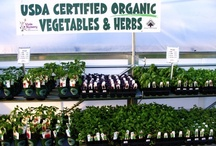Organically grown foods / Viola Nursery is committed to help you grow sustainable and organic foods. Lots of ideas and helpful hints can be found on this board if you want to make the move to a healthier food source. / by Viola Nursery and Greenhouse
