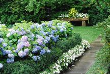 Outdoor flora / Garden