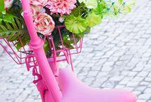 coers rosa