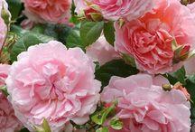 Midges gardening page / Gardening