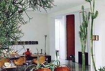 garden objects | houseplants / H O U S E P L A N T S + I N T E R I O R S