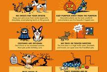 Pet Infographics