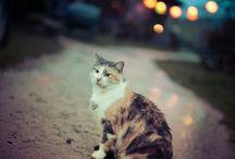 Gorgeous Pets & Animals