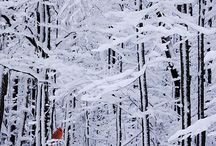 ⋆❋ Winter Wonderland