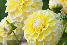 Flowers - La magia dei Fiori