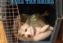 Fuzzy Buds: Blog Posts