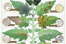 guia plantas enfermedades