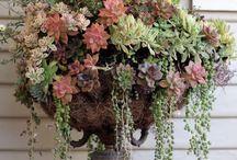 Flower arrangements / by Terri Brantley