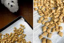 biscotto per cani