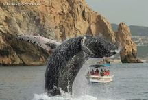 Visita Baja California Sur / by Visit Baja California Sur