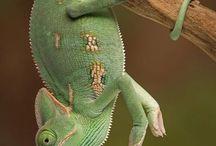 animal:爬虫類