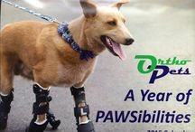 Bionic Buddies / Bionic Buddies is OrthoPets' non-profit fund to assist financially with patients in need of pain management and mobility assistance.