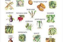 Gyümölcs, zöldség