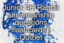 4-H Rabbits