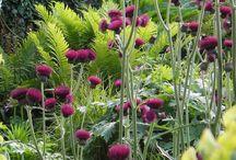 Lime purpur trädgård
