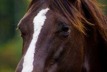 Beautiful Horses | Rancho Las Cascadas