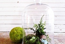 Centerpiece love / parties / by Shannon Baker