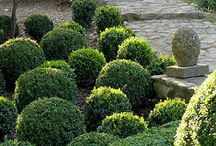 garden :: topiary and hedges