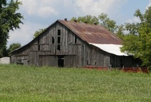 Barns / by Tricia Roux
