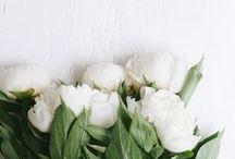 ✖️ FLOWERS