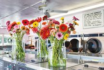 Miami Launderette /  Wonderful gerberas in glass vases inside the launderette in Miami