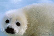 IFAW- Instagram / by The International Fund for Animal Welfare - IFAW