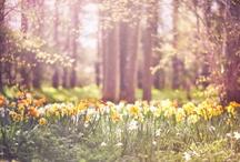Spring has sprung / by Kristy Jones