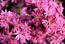 Pretty in Pink / Pink flowers