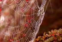 Spiders and spiderweb
