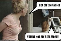 Cats and funny