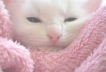 cats, kittens, feline