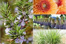 Plantas e Flores / Dicas básicas para cultivar plantas e flores em casa. Plantas medicinais, plantas repelentes, Suculentas e muitas outras espécies de plantas que dão super bem na parte interna.
