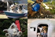 Camping Canines / by Cody KOA