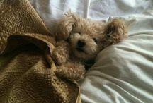 We Need a Dog / by Aubrey MW