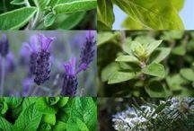 Plantas e temperos