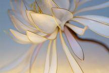 Цветы из капроновых чулок.