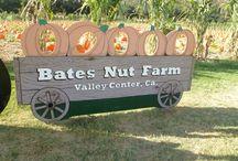 Bates Pumpkin Patch
