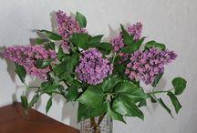 Сирень из полимерной глины / В букете 5 веток сирени. Цветы не закреплены в вазе. Высота 30 см.