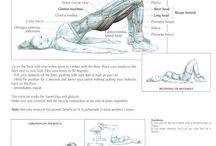 Sport anatomie