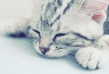 cute catzz!