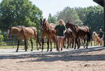 Het werk op De Paardenkamp