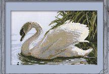 Swans / by Fatbardha Pojani