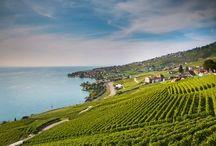Los viñedos más bonitos del mundo