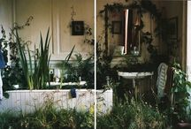 INDOORS / Plants growing indoors. Simple...
