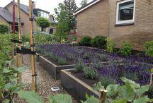 Plantenbakken en waterelementen / Een aantal van de door Lifestyle Tuinen geplaatse plantenbakken en waterelementen.