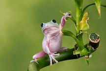 ART: Frogs